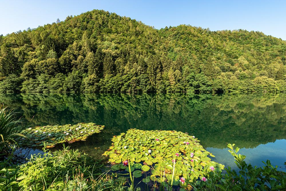 Lago di Levico, boschi