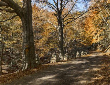 Parco regionale Campo dei Fiori