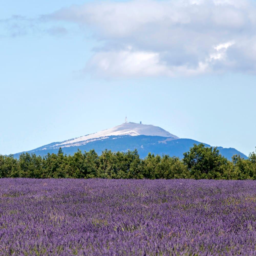 Monte Ventoso, Provenza, estate